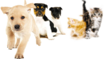 puppies-and-kittens-2-350x200
